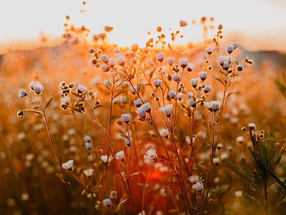 #BeSmart: Las cinco mejores rutas en primavera